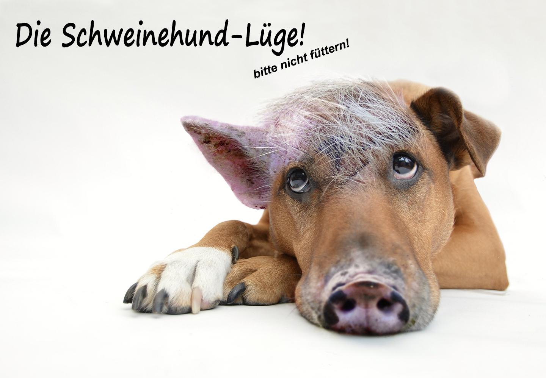 Die Schweinehund-Lüge, guter Artikel über Motivation