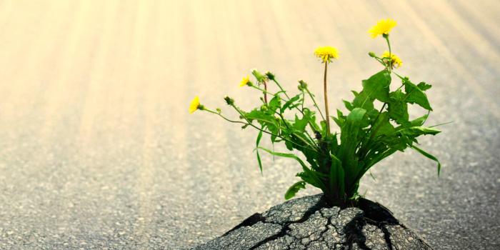 Resilienz entwickeln mit Mentaltraining